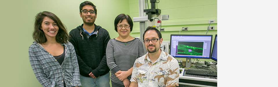 Stony Brook-led research suggests new strategies to treat metastatic cancer
